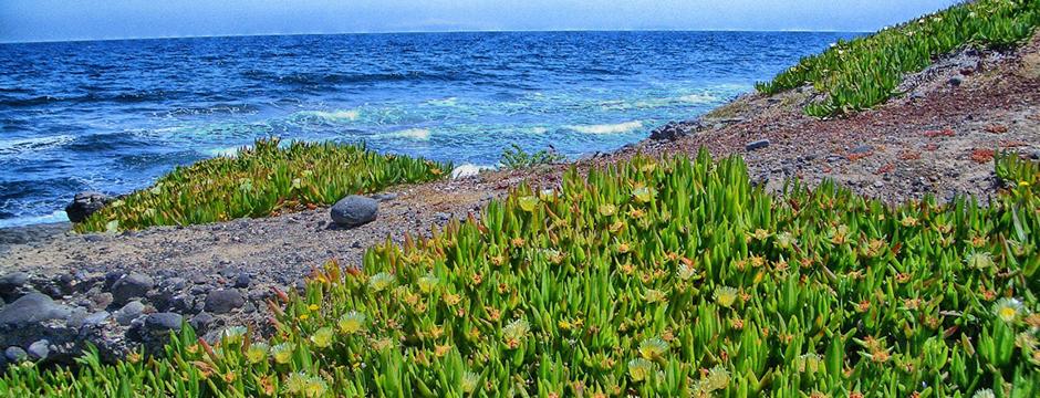 Spiaggia di Capo Colombo Santorini